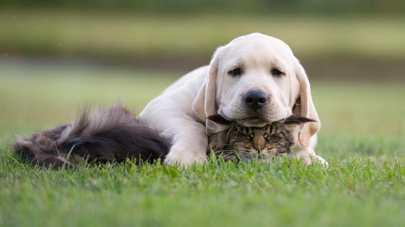 hund vil ikke spise tørfoder